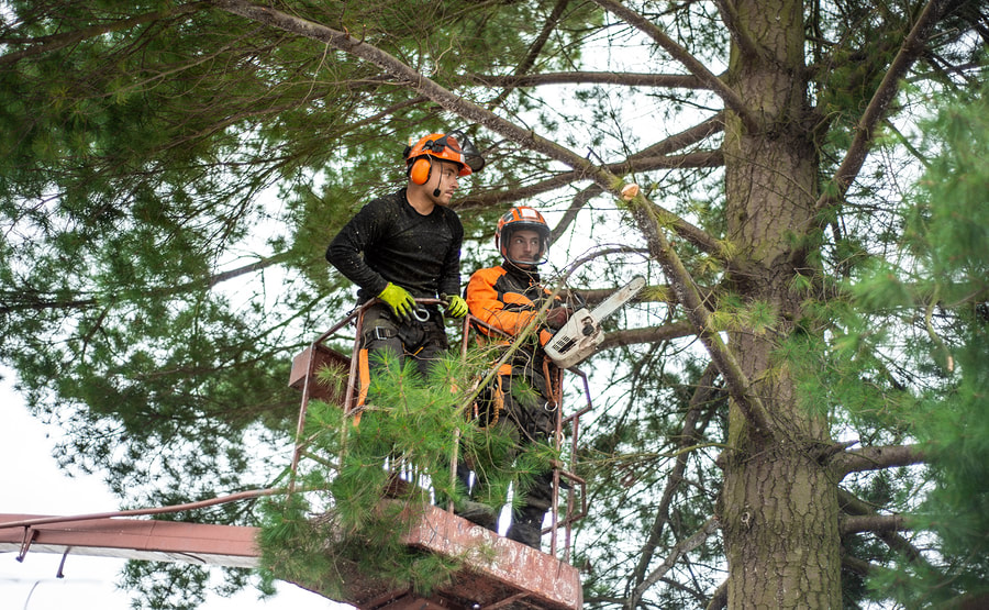 reliable tree trimming service